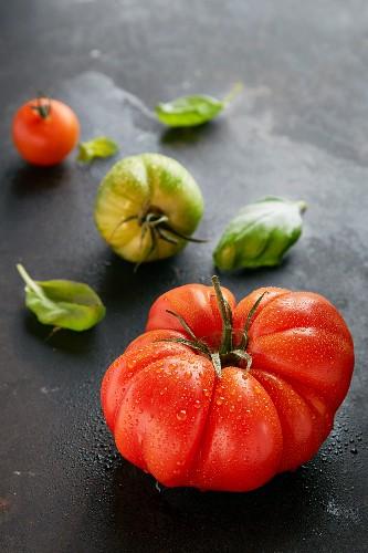 Verschiedene Tomaten mit Wassertropfen und Basilikum