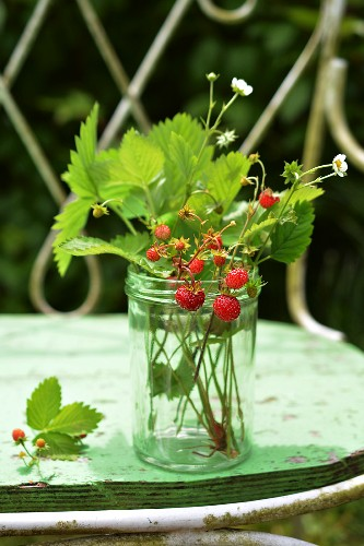 Sprigs of wild strawberries in a glass on a garden bench