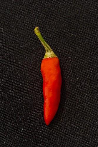 Chilli 'Bird'S Eye' (a very spicy chilli)