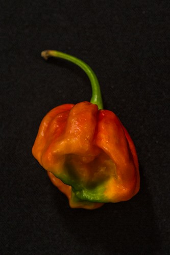 A Lucy chilli pepper
