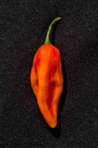 A Sbs Demon chilli pepper