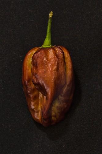 A Yaki Blue chilli pepper