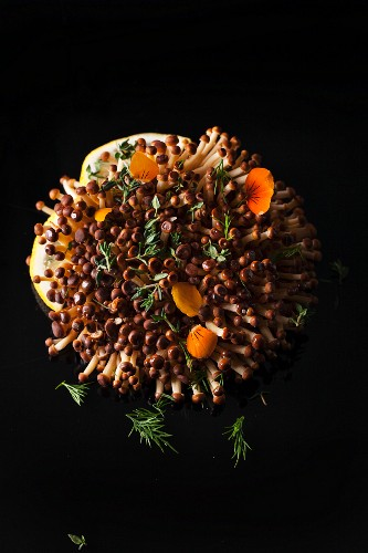 A flowering mushroom, thyme and dill on a black surface