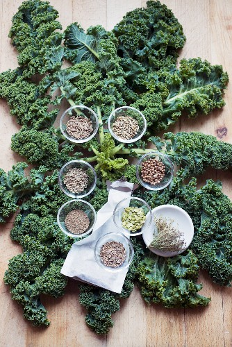 Kale (leaf cabbage) and suitable seeds for a stock (caraway, fennel, coriander, parsnip, carrot, dill, celery and aniseed)