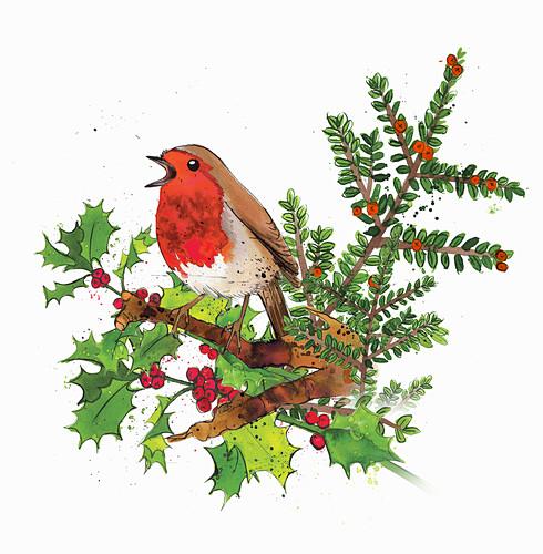 Robin redbreast in winter, illustration