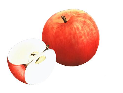 Fiesta apples, illustration