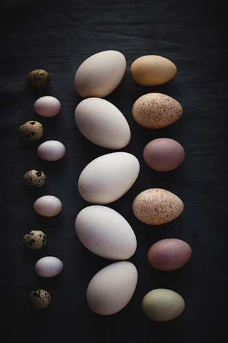 Eggs of different sizes and colors, lined up