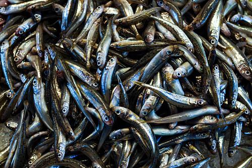 Many small fresh fish (full screen)