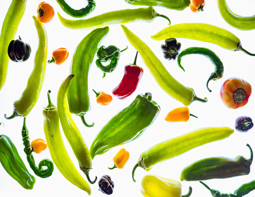 Different types of peppers in transmitted light (full screen)