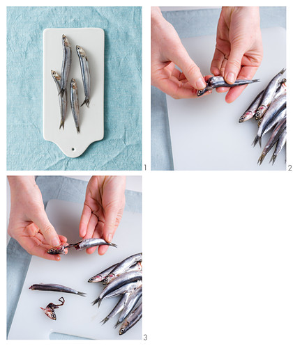 Anchovies being prepared
