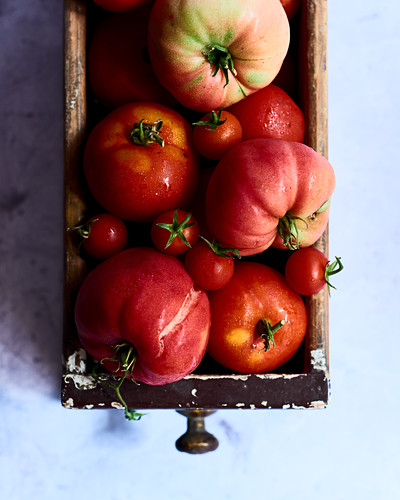 Freshly harvested organic tomatoes (seen from above)