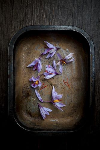 Safranblüten auf Backblech