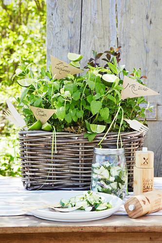 Summery cucumber salad on garden table