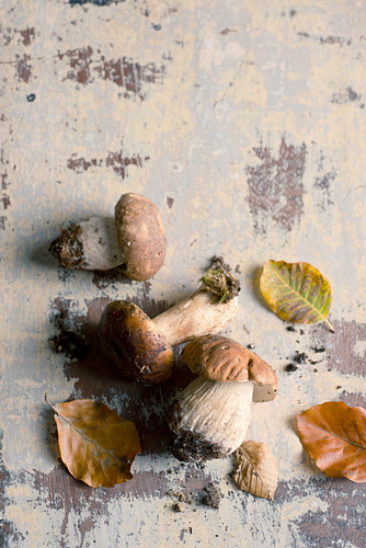 An arrangement of porcini mushrooms and autumnal leaves