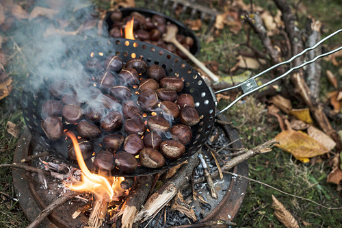 Roasted chestnuts in a pan over a camp fire