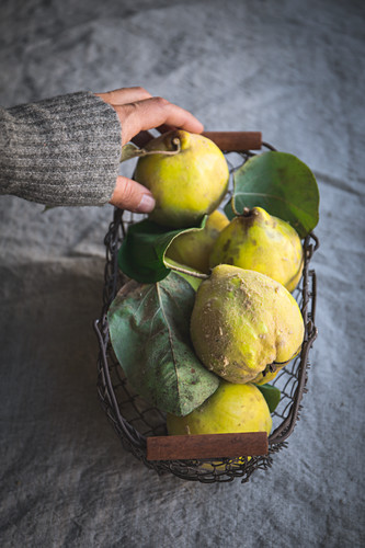 A hand reaching for quinces in a metal basket