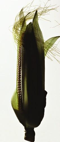 Corn on the Cob in the Husk with Corn Silk