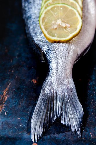 Dorade with lemon slices
