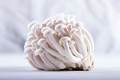 Asian edible mushrooms shimidzhi