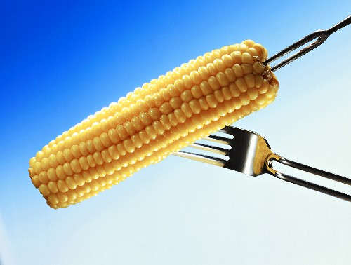 Two Forks Sticking into an Ear of Corn