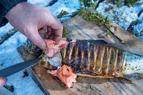 A winter barbecue: smoked salmon trout being filleted (Norway)