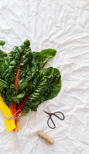 From above bunch of fresh chard placed on wrinkled white cloth near small scissors and thread