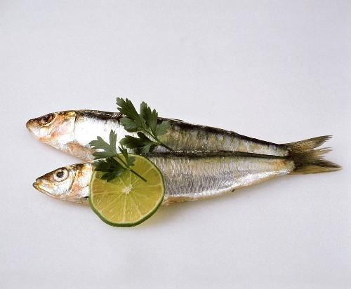 Zwei Sardinen mit Limettenscheibe & Petersilienblättchen