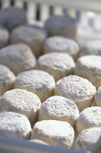 Lots of fresh goat's cheeses in a plastic crate (close-up)