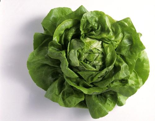 A Large Head of Butterhead Lettuce