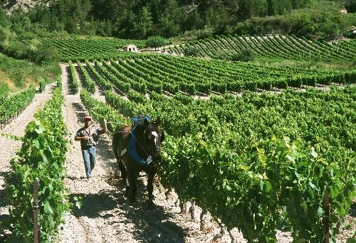Ecological wine-growing in Chatillon en Diois, N. Rhone