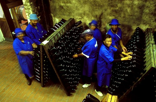Worker at pupitres, Buitenverwachting Winery, S. Africa