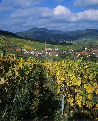 View over Birkweiler, Rheinland Pfalz