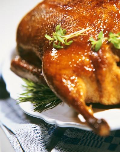 Roast duck (close-up)