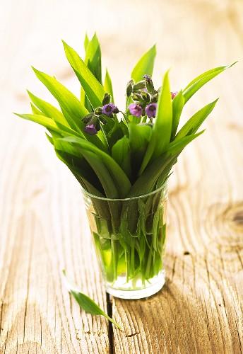 Fresh ramsons (wild garlic) leaves & purple cowslips in glass