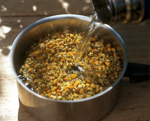 Infusing chamomile flowers (for tea or steam bath)