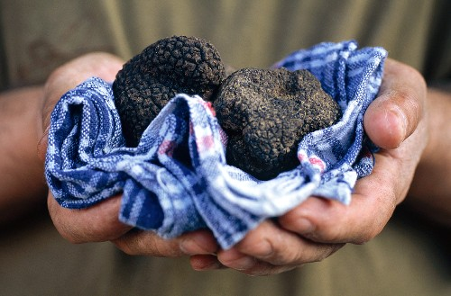 Hand holding black truffle in a kitchen cloth