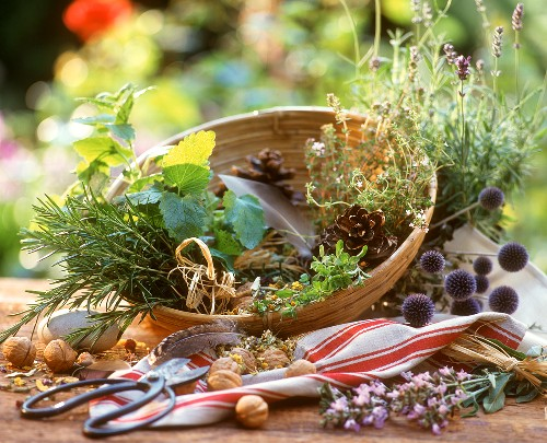 Still life with late summer plant and herb decoration
