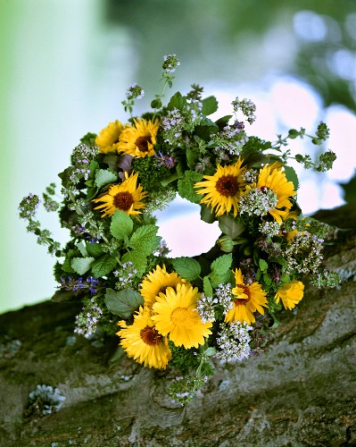Wreath of medicinal plants and herbs