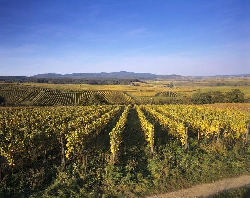 The Schloss Vollrads wine estate, Rheingau, Germany