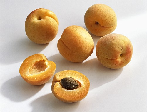 Apricots (Prunus armeniaca), variety 'Modesto' from France