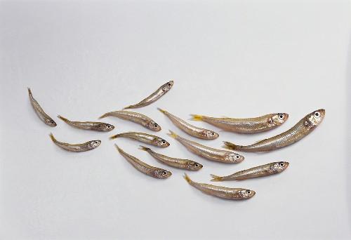 ährenfische