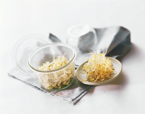 Home-grown mung bean and alfalfa sprouts