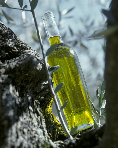 A bottle of olive oil leaning against an olive tree