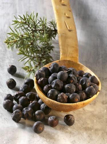Juniper berries on and beside wooden spoon, juniper sprig