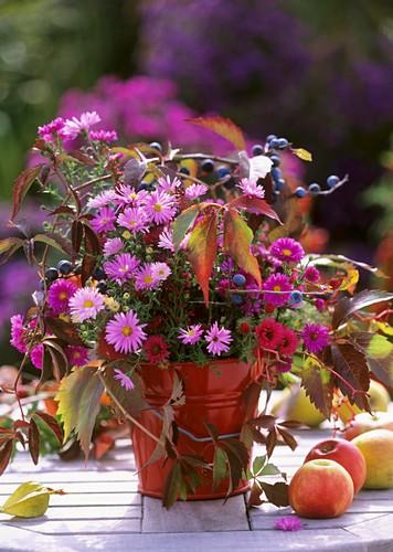Michaelmas daisies (Aster), Gaura, Parthenocissus