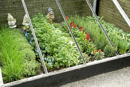 Herbs and flowers in cold frame