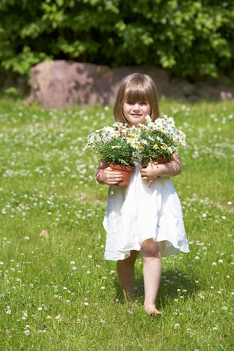 A little girl holding two flowerpots of daises