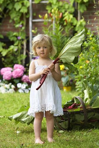 A little girl in a garden holding rhubarb