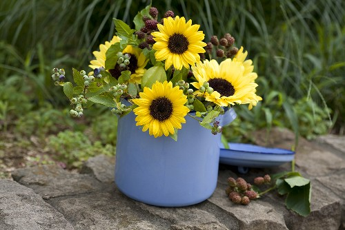 Sunflowers with sprigs of blueberries and blackberries in an enamel pot