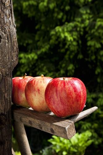 Three red apples on wooden rake in garden